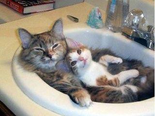 images de chats rigolos 2013