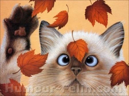 Images de chats rigolos - Images de chats rigolos ...